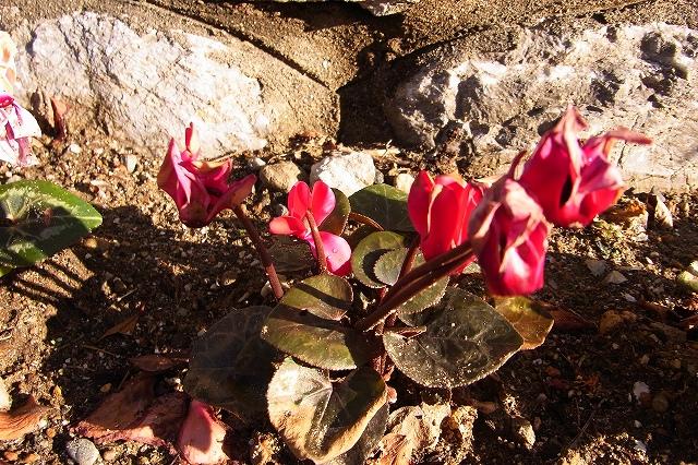 0215-flower-04-s.jpg