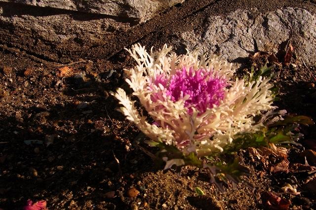 0215-flower-05-s.jpg