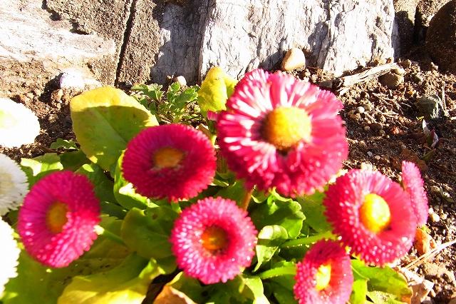 0215-flower-06-s.jpg