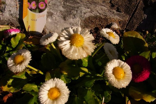 0215-flower-07-s.jpg