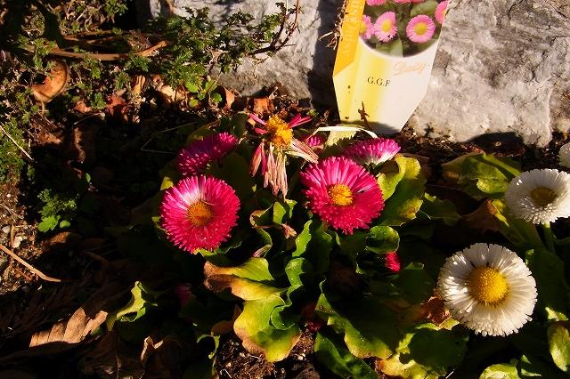 0215-flower-08-s.jpg