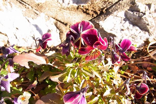 0215-flower-09-s.jpg