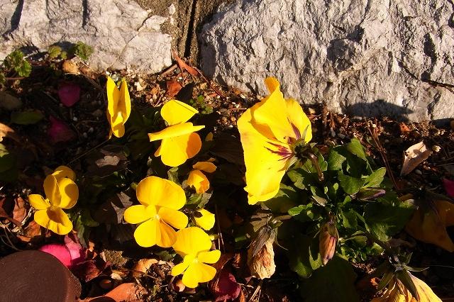 110222-flower-012.jpg
