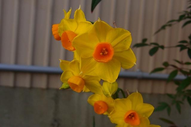 110222-flower-02.jpg
