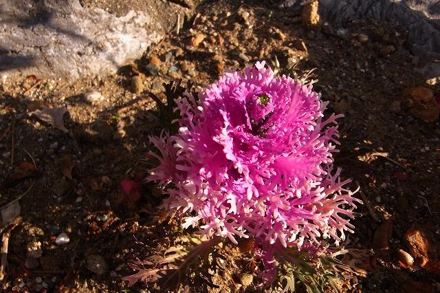 110222-flower-05.jpg