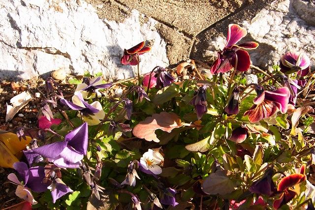 110222-flower-07.jpg