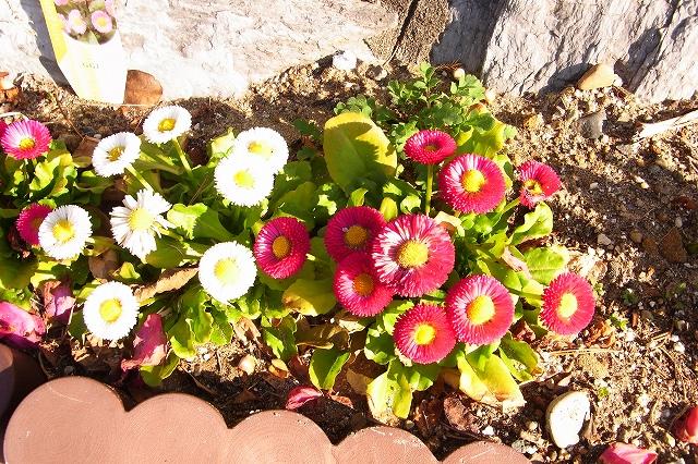 110222-flower-08.jpg