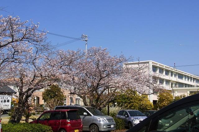 110405-sakura-014.jpg