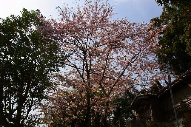 110411-spring-01.jpg