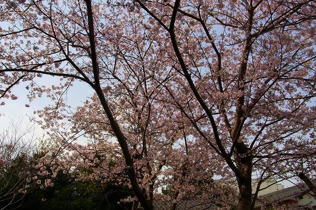 110411-spring-011.jpg