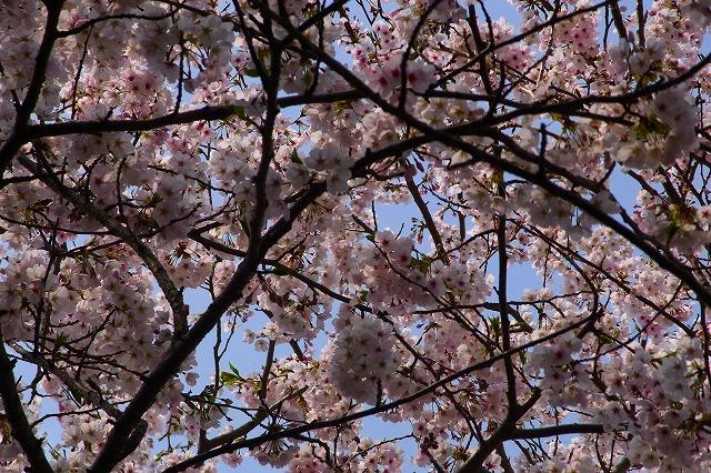 110411-spring-012.jpg