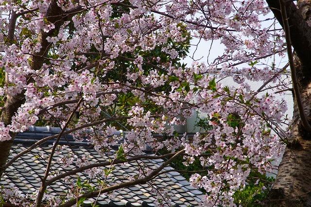 110411-spring-013.jpg