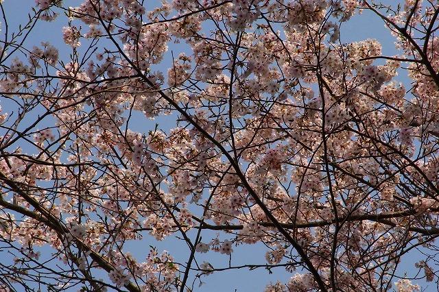 110411-spring-014.jpg