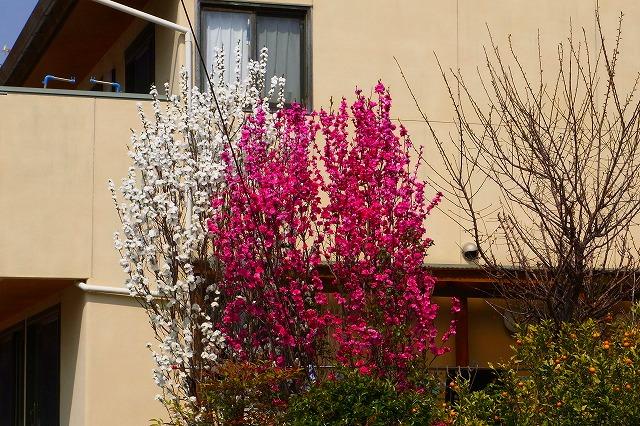 110411-spring-021.jpg