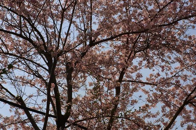 110411-spring-03.jpg