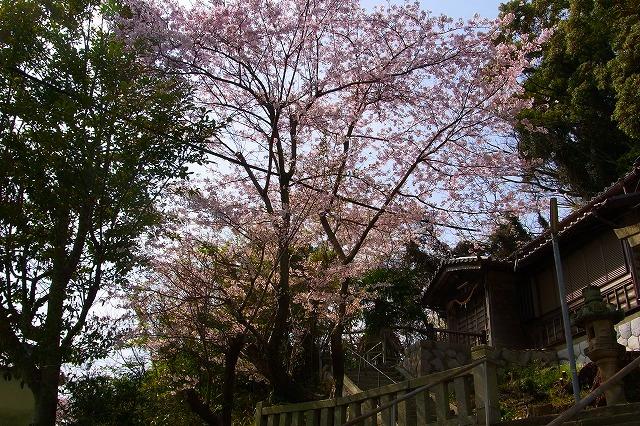 110411-spring-04.jpg