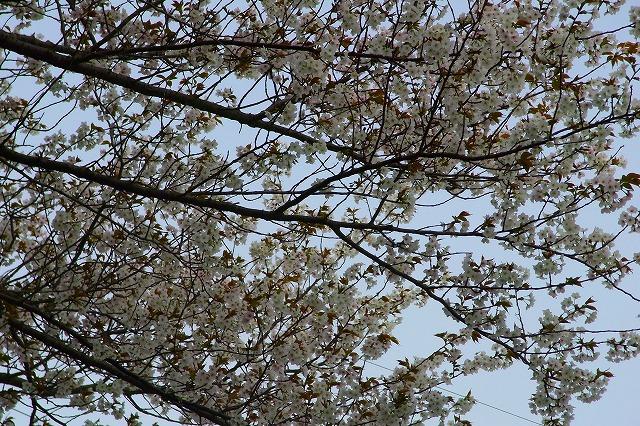 110411-spring-06.jpg
