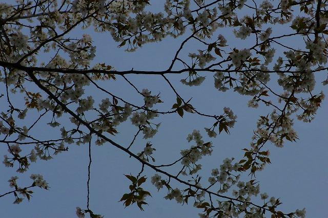 110411-spring-07.jpg