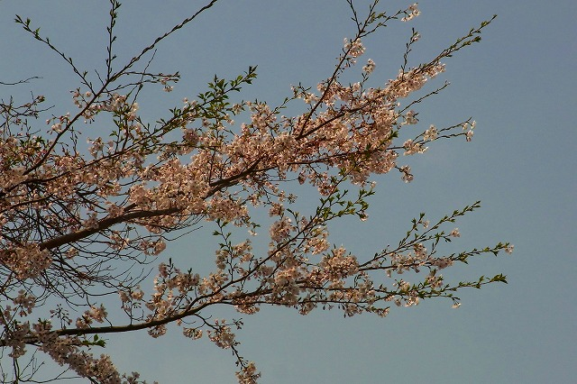 110411-spring-08.jpg