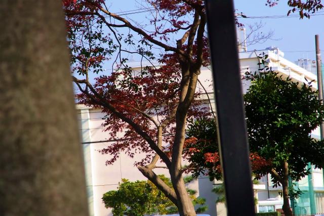 1209-Park0010-S.jpg