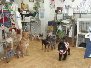 譲渡会1127犬