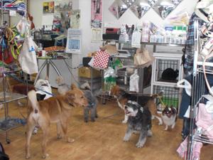 譲渡会1212犬