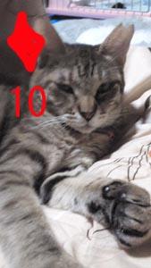 ダイア10