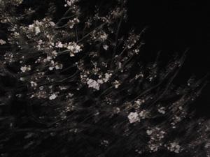 SN3S0124.jpg