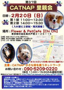 catnap_20110220_2.png