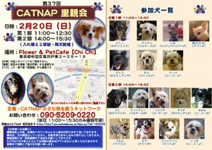 catnap_20110220_3.png