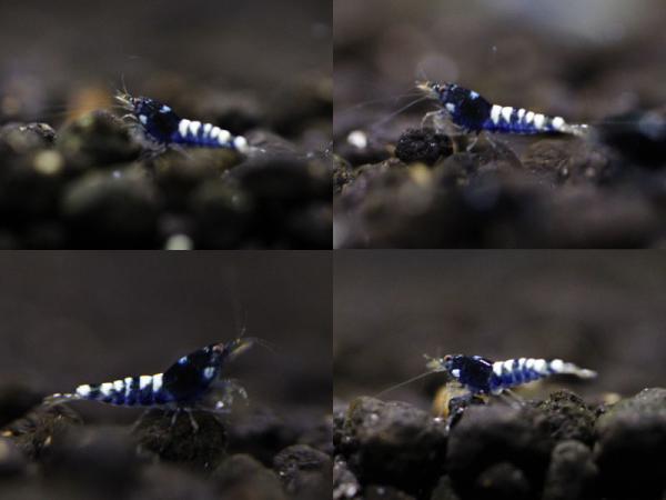 kabuki-1.jpg