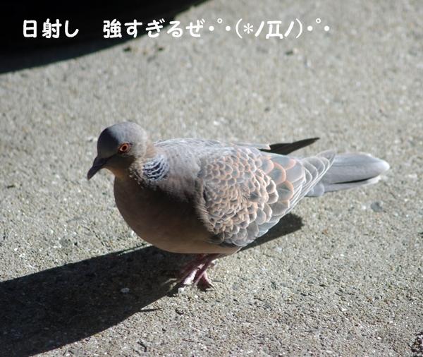 kijibato1.jpg