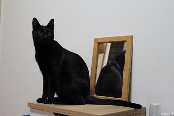 鏡の中のノア