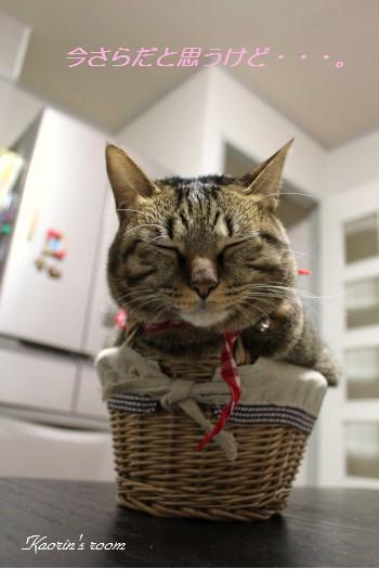 すぅちゃん籠猫