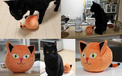 かぼちゃ猫
