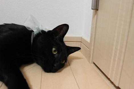 あーにゃん便 (8)
