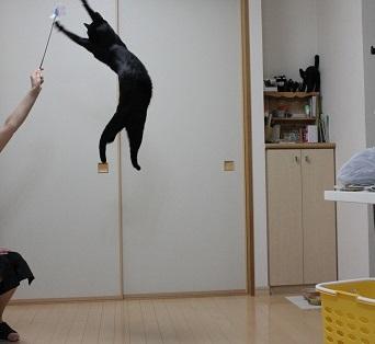 跳ぶ (3)