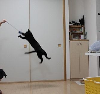 跳ぶ (1)