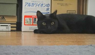 ゴーちゃん (3)