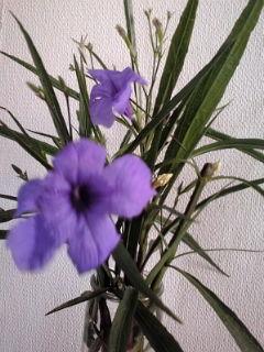 花かびん110711