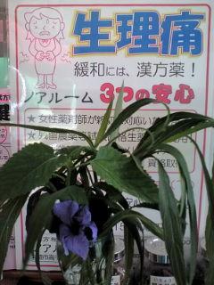 生理痛ポスターと花110711