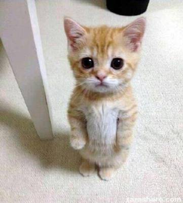 stand cat