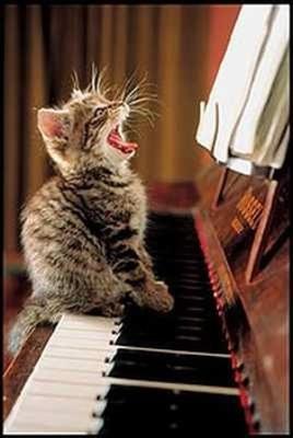 ピアノふんじゃったあああ