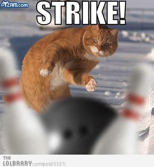 cat-bowling-3337[1]