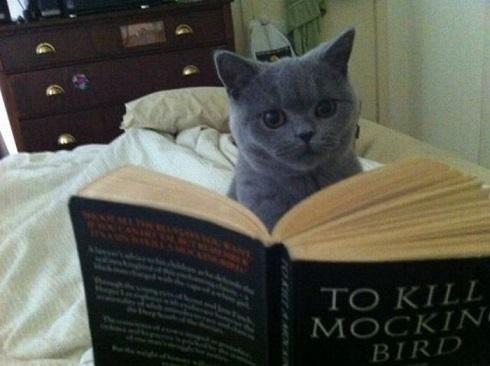 cat-reading[1]