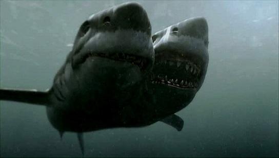 shark[1]