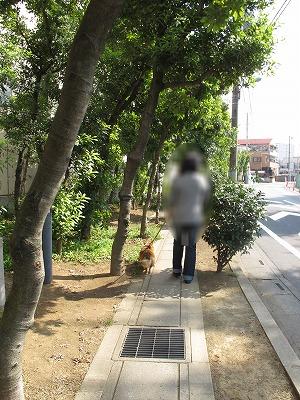 IMG_4371-s.jpg