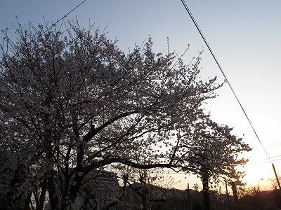 IMG_4422-s.jpg