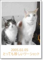 20050205.jpg