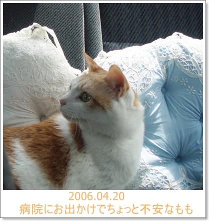 20060420.jpg